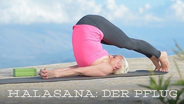 Asana des Monats: Halasana – der Pflug