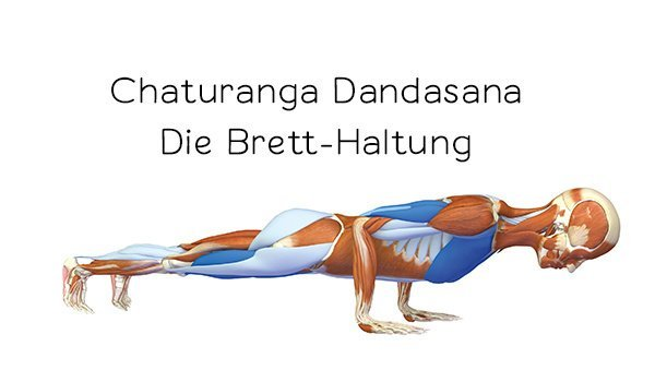 Yoga-Anatomie 3D: Chaturanga Dandasana