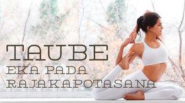 I270 150 yoga taube asana