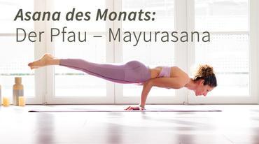 I370 208 mayurasana pfau asana yoga artikel 1694842771