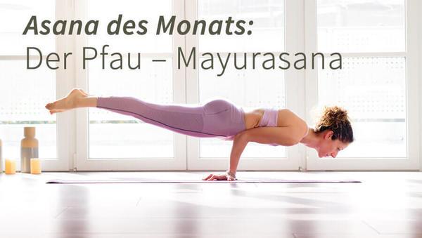 Asana des Monats: Pfau – Mayurasana