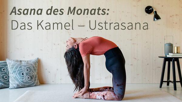 Asana des Monats: Ustrasana – das Kamel