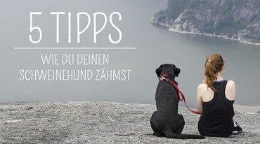 I370 208 5 tipps schweinehund shutterstock 192829814
