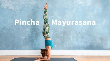 I370 208 unterarmstand pincha mayurasana yoga header
