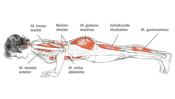 Yoga-Anatomie: Chaturanga Dandasana