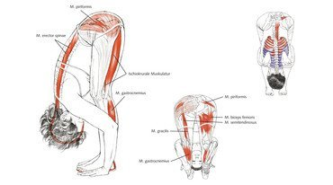 I370 208 yoga anatomie uttanasana