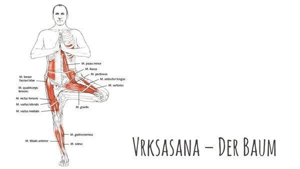 Yoga-Anatomie: Der Baum – Vrksasana