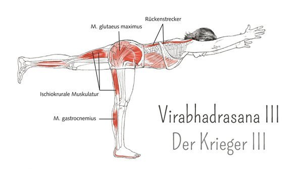 Yoga-Anatomie: Virabhadrasana III – Krieger III