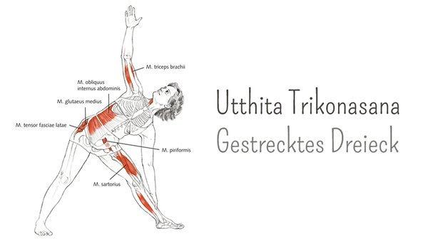 Yoga-Anatomie: Utthita Trikonasana – das Dreieck