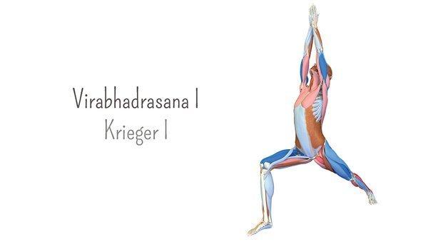 Yoga-Anatomie 3D: Krieger I – Virabhadrasana I