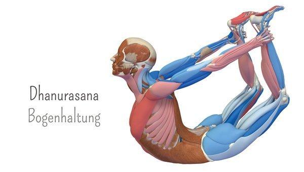 Yoga-Anatomie 3D: Der Bogen – Dhanurasana