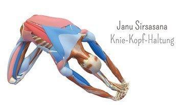 I370 208 anatomie 3d knie kopf