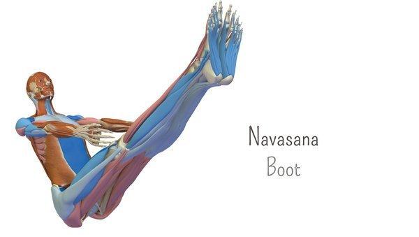 Yoga-Anatomie 3D: Das Boot – Navasana