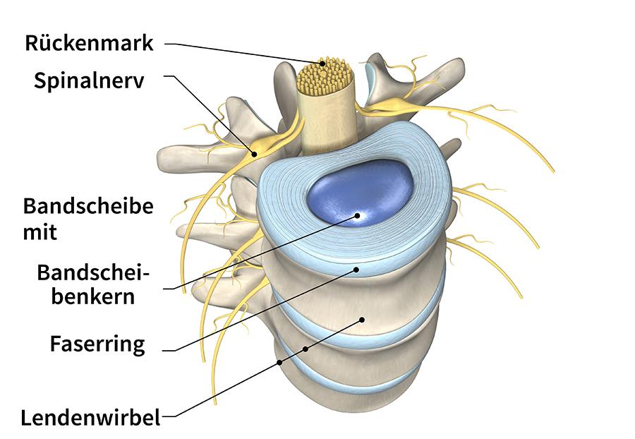 Bandscheibe Wirbelsäule