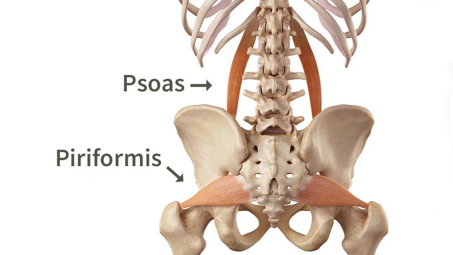 Hüfte Anatomie