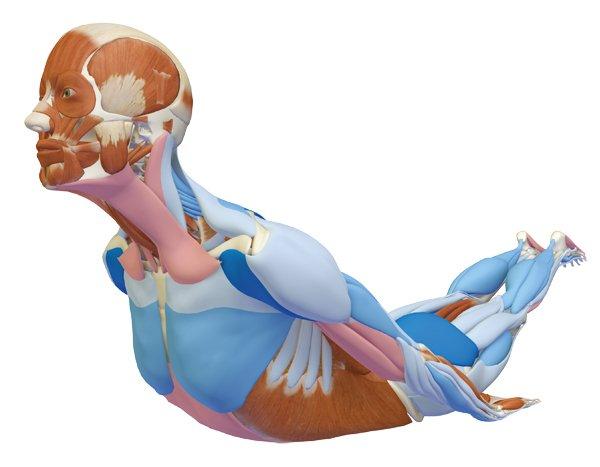 Yoga Heuschrecke