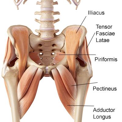 Hips don\'t lie: Erkenne deine Anatomie!
