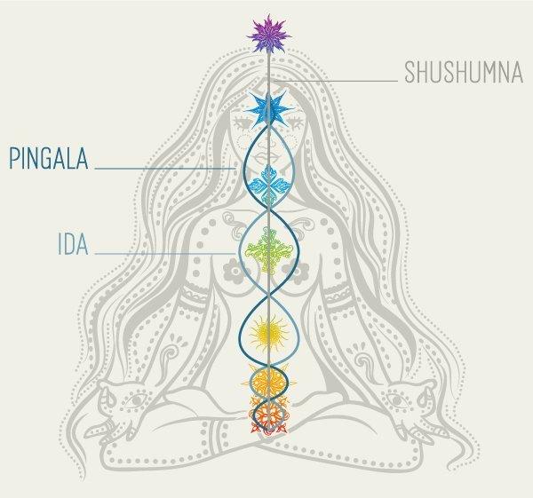 Alles über Yoga-Übungen - mit Asana-Lexikon