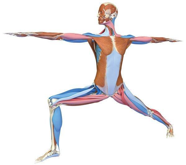 Krieger II Yoga