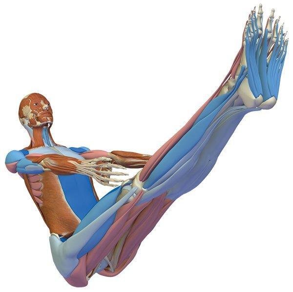 Anatomisch korrekt in die Boothaltung Navasana