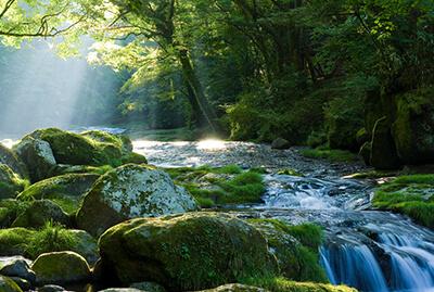 Duft Yoga Rezepte Wald